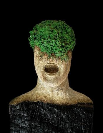 Natur kommt zurück Flechte grün